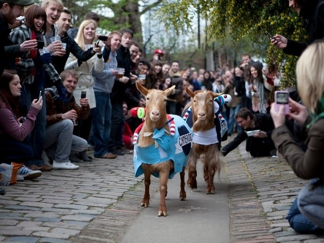 The Oxford vs Cambridge Goat Race
